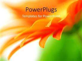 PowerPlugs: PowerPoint template with blurred orange vivid flower petals with nature