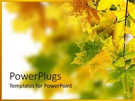 PowerPlugs: PowerPoint template with branch of maple leaves changing color beginning of fall