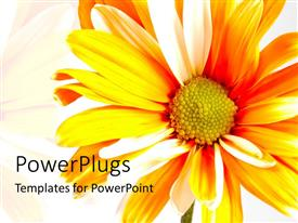 PowerPlugs: PowerPoint template with bright orange sunflower over white background