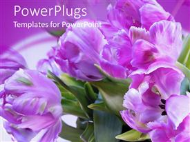 PowerPlugs: PowerPoint template with bright purple colored flowers in its natural green habitat