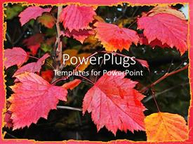 PowerPoint template displaying bright red autumn leaves, fall, seasons