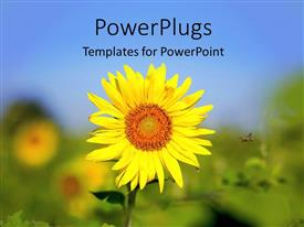 PowerPlugs: PowerPoint template with a bright yellow sun flower seed on an open field