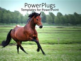 PowerPlugs: PowerPoint template with brown and black horse running on a green field with green trees and blue sky
