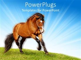 PowerPoint template displaying brown and black stallion horses galloping on green grassy meadow