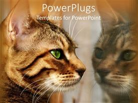 PowerPoint template displaying brown cat with green eyes staring at is reflection