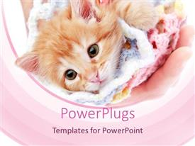 PowerPlugs: PowerPoint template with brown furry pussy cat in a pink knitted cloth