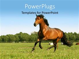 PowerPoint template displaying brown horse running in a filed of sunflower with thick forest