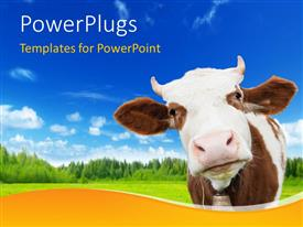 PowerPoint template displaying brown and white cow with bell on background of grass, trees, sky