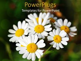 Elegant theme enhanced with bunch of daisies on green background