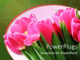 PowerPlugs: PowerPoint template with a bunch of pink tulip flowers on a green background