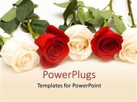 PowerPlugs: PowerPoint template with bunch of red and white roses with white color