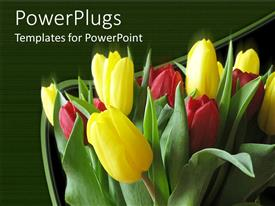 PowerPoint template displaying bunch of red and yellow colored tulips on a green background