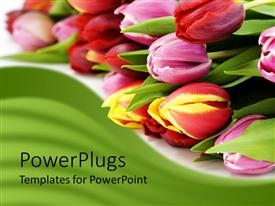 PowerPlugs: PowerPoint template with bunch of tulips laying on white background