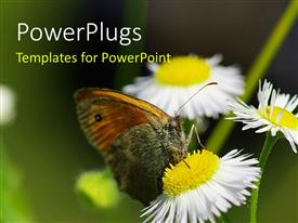 PowerPlugs: PowerPoint template with a number of flowers with a butterfly