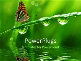 PowerPlugs: PowerPoint template with a butterfly on a branch in a lake