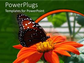 PowerPlugs: PowerPoint template with a butterfly on the flower with greenery in the background