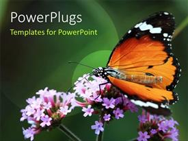 PowerPlugs: PowerPoint template with a butterfly on the flower with greenish background