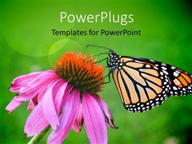PowerPlugs: PowerPoint template with a butterfly on the flower with greenish background and place for text