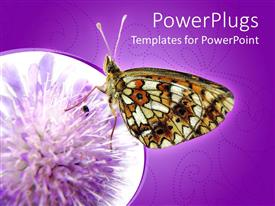 PowerPlugs: PowerPoint template with a butterfly on a flower with purple background