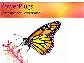 PowerPlugs: PowerPoint template with a butterfly with a flower and white background