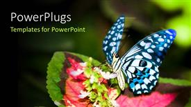 PowerPoint template displaying a butterfly on the flower with greenery in background