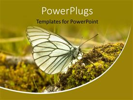 PowerPlugs: PowerPoint template with a butterfly with greenery in the background