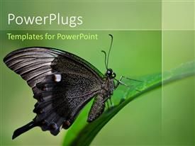 PowerPlugs: PowerPoint template with a butterfly with a greenish background and place for text