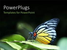 PowerPlugs: PowerPoint template with a butterfly with a lot of greenery in the background
