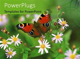 PowerPlugs: PowerPoint template with a butterfly and a number of flowers