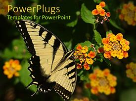 PowerPlugs: PowerPoint template with a butterfly with a number of flowers