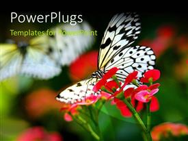 PowerPlugs: PowerPoint template with a butterfly with a number of flowers and blurr background