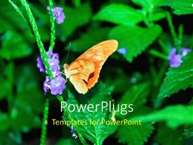 PowerPlugs: PowerPoint template with butterfly perches on purple flower of green plant on black background