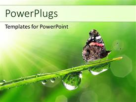 PowerPlugs: PowerPoint template with butterfly sitting on a leaf with fresh morning dew drops