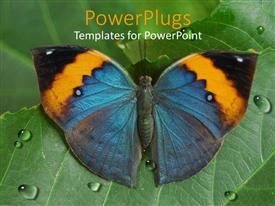 PowerPlugs: PowerPoint template with a butterfly sitting on a leaf with water droplets