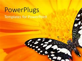 PowerPlugs: PowerPoint template with a butterfly with a sunflower in the background