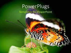 PowerPoint template displaying butterfly sucking nectar of flower in green garden