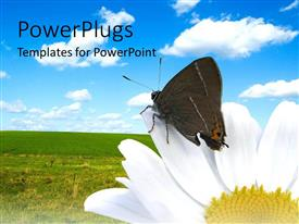 PowerPlugs: PowerPoint template with butterfly on white flower in green garden with blue cloudy sky
