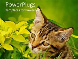 PowerPoint template displaying a cat along with a lot of leaves