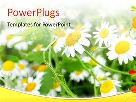 PowerPlugs: PowerPoint template with bright sun rays shining on beautiful flower field