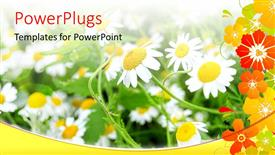 PowerPoint template displaying bright sun rays shining on beautiful flower field