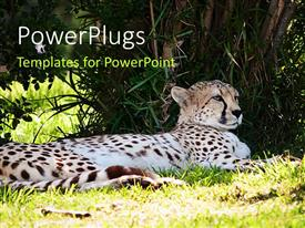 PowerPlugs: PowerPoint template with a leopard with greenery in the background