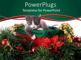 PowerPoint template displaying christmas theme with red and green basket and gray with white kitten in basket, surrounded by Christmas decorations