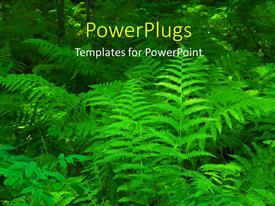 PowerPlugs: PowerPoint template with close-up of beautiful fern leaves in thick forest