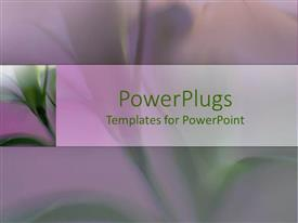 PowerPlugs: PowerPoint template with close-up of beautiful green lily flower with long stems