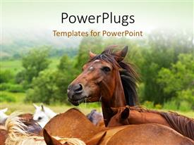 PowerPlugs: PowerPoint template with close-up of horses in green field with trees in background