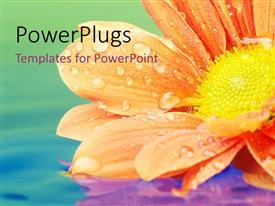 PowerPlugs: PowerPoint template with a beautiful flower in a lake