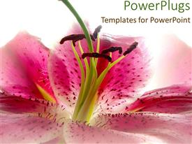 PowerPlugs: PowerPoint template with close-up of pink flower on colorful background