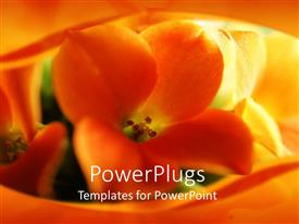 PowerPlugs: PowerPoint template with close-up view of the inside of a sunflower