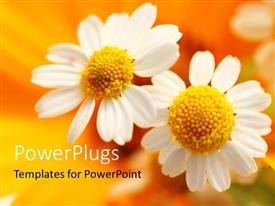 PowerPlugs: PowerPoint template with close-up of white flower over orange blurry background
