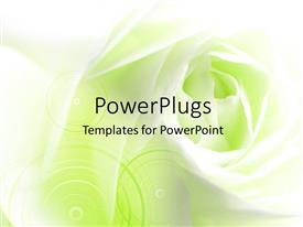 PowerPlugs: PowerPoint template with close-up of a white rose with green color